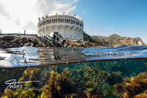 at Avalon Dive Park, Catalina Island, California by Michael Fabos