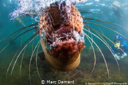 One of my first memories of swimming was having to stick ... by Marc Damant