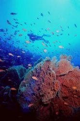 Red Sea Colors! Drifting along Thomas Reef, Strait of Tir... by Erich Reboucas