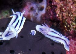 Nudi Party, with ghost guest in b/g (no digital trickery,... by Andrew Dawson