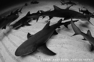 Sharknado!!! by Steven Anderson
