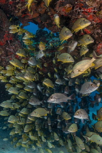 Fishes in the Arch of moc-che, Playa del Carmen México by Alejandro Topete