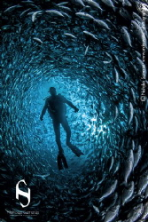Lost is a swirl of fish. Camera: Canon EOS 5D Mark II. ... by Nicholas Samaras