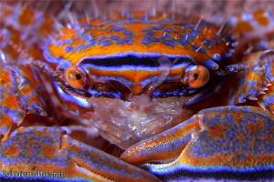 Crab by Iyad Suleyman