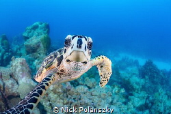 Thats the last time I let Mr Turtle use my camera! by Nick Polanszky