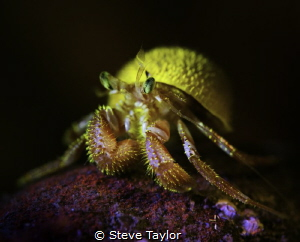 Fluorescent hermit crab by Steve Taylor