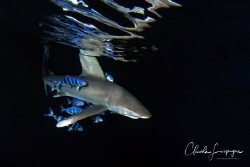 Longimanus by night ! by Claude Lespagne