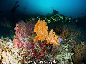 Diving in Maldives by Sigitas Sirvydas