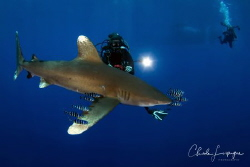 Divers end Longimanus , Elphinstone ! by Claude Lespagne