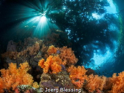 """Reef meets Jungle at """"The Passage"""", Raja Ampat by Joerg Blessing"""