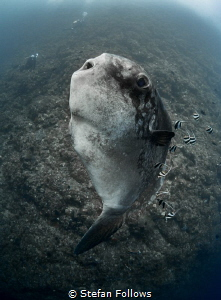 Glass Chin