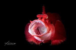 Roar by Jinggong Zhang