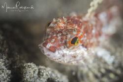 Tiny little fish face by Mario Robillard