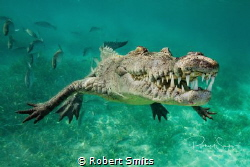 I really feel you get a sense of just how prehistoric thi... by Robert Smits