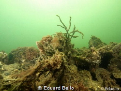 In a sandy water the live is quet. Temperature 4C. So the... by Eduard Bello