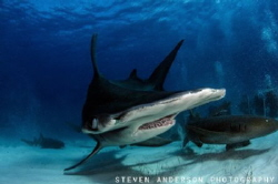 Hammer time in Bimini Bahamas by Steven Anderson