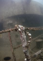Marine life beginning to colonise handrails on HMS Scylla... by Mark Thomas
