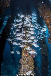 """""""Underneath the Salt Pier of Bonaire, you can get lost in... by Nick Polanszky"""