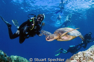 Beautiful Hawksbill turtle in flight entertaining divers ... by Stuart Spechler