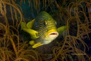 Swimming colors by Patrick Verbustel