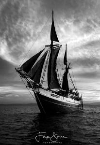 MS Ondina, Banda sea, Indonesia. by Filip Staes