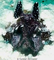 Mantis Shrimp (shadow stormtrooper) Nikon Aw130 Summerisl... by Carsten Schroeder