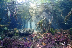 This picture is taken at Mangrove diving site in Raja Amp... by Qunyi Zhang