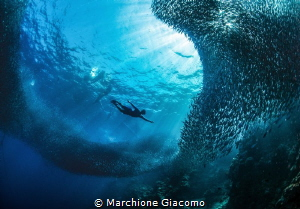 Free diving in meddel the sardines.