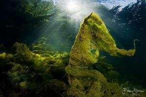 The pond of Ekeren, Belgium by Filip Staes