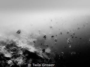 B&W by Twila Grower