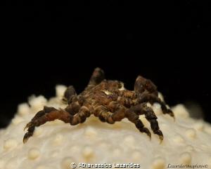 Tiny spider by Athanassios Lazarides