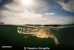 American crocodile by Massimo Giorgetta