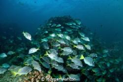 Sea Mount - Galapagos by Morgan Ashton