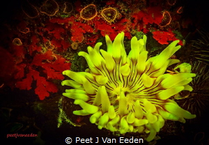 Fluorescence of the known and the unknown by Peet J Van Eeden
