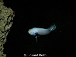 Not a sea, but a hudge dive tank. Todi by Eduard Bello