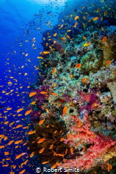 """Did you know that the Red Sea is also called """"The Cradle ... by Robert Smits"""