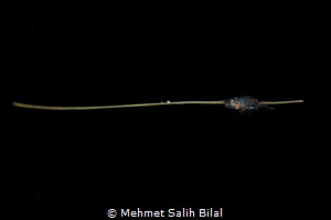 At first sight I thought this small creature is riding on... by Mehmet Salih Bilal