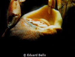 Holding each other. Husband and wife... by Eduard Bello