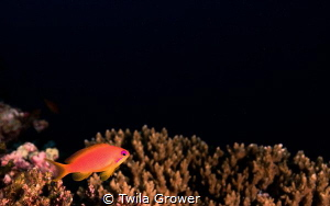 Colour pop by Twila Grower