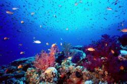 Coral Garden at Jackson Reef, Strait of Tiran, Egypt! Ain... by Erich Reboucas