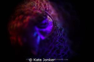 The Eye of the Beholder Eye of a tiny cuttlefish, shot u... by Kate Jonker