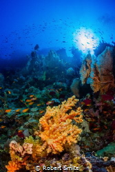 The Red Sea in Egypt is also called 'The Cradle of Life' ... by Robert Smits