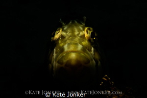 Bohemian Rhapsody Snooted Super Klipfish at Stone Dog in... by Kate Jonker