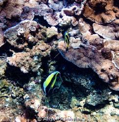 Kopoho Tide Pools, Hawaii by Alison Ranheim