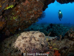 Wobbegong...awesome word. by Joerg Blessing