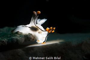 Glowing pikachu. by Mehmet Salih Bilal