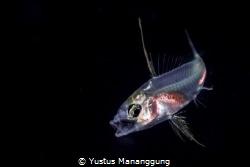 From Black Water Dive by Yustus Mananggung
