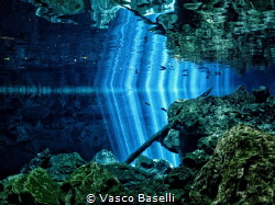 The way light finds it way through the jungle into the fr... by Vasco Baselli