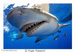 Shark picture taken on Jupiter, FL with Nikon D300-Hugyfo... by Hugo Masaryk