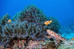 Reef Scene by Henley Spiers